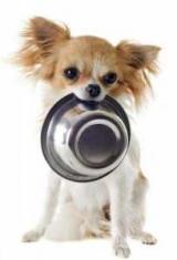 Питание щенка Чихуахуа в 2 месяца: как правильно питаться, советы и рекомендации специалистов