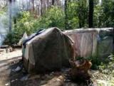 Валят лес, укладывают кирпичи в защиту цыган, которые разбили новый лагерь в большая сладкоежка