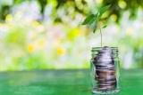 Це до грошей: які грошові рослини варто вирощувати вдома