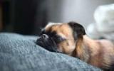 Як позбавитися від запаху псини в квартирі: 9 перевірених способів