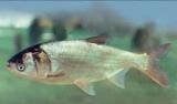 Крабы в аквариуме: содержание и уход