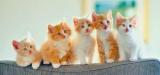 Имя для рыжей кошечки: оригинальные и красивые имена, значение