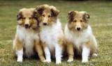 Чому у собак мокрий ніс і про що це говорить?